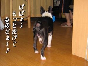 06_08_17_03.jpg