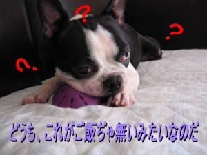 06_08_18_03.jpg