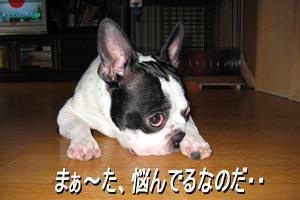 06_08_30_01.jpg