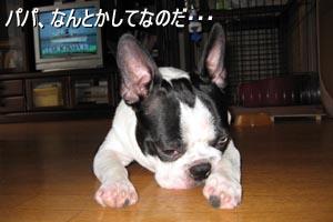 06_08_30_04.jpg