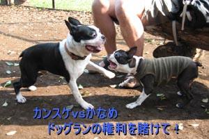 06_09_05_01.jpg