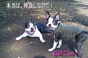 06_09_05_04.jpg