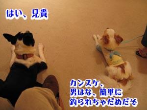 06_09_11_03.jpg