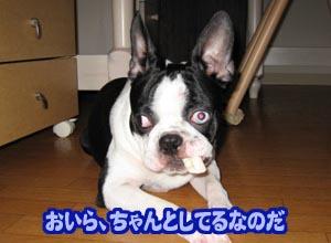 06_09_14_03.jpg