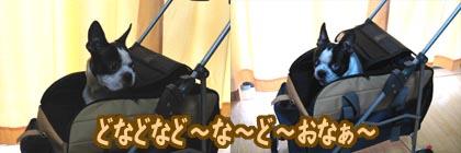 06_09_15_05.jpg