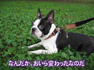 06_09_19_04.jpg