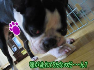 06_09_24_05.jpg