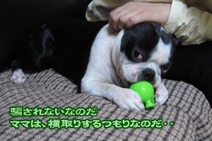 06_10_17a_04.jpg