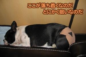 06_12_11_03.jpg