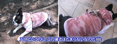 07_05_10_12.jpg