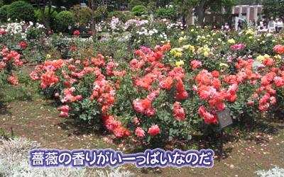 07_05_30_03.jpg