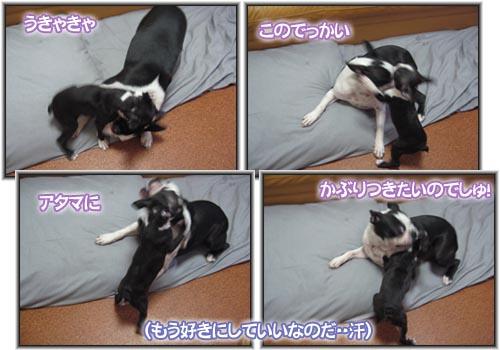 07_08_02_09.jpg