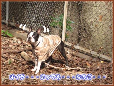 10_06_09.jpg
