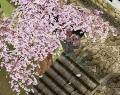 桜舞い散る中に