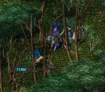 ジャングル・・・
