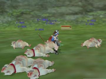 初めての豚訓練所
