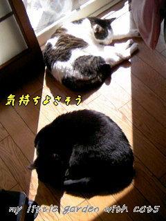 mina&jiji