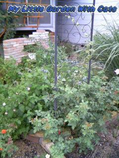ぼうぼうの庭