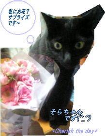 妹の猫そらと花☆