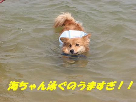海ちゃんの泳ぎ2