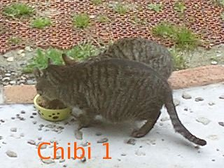 chibi01_1