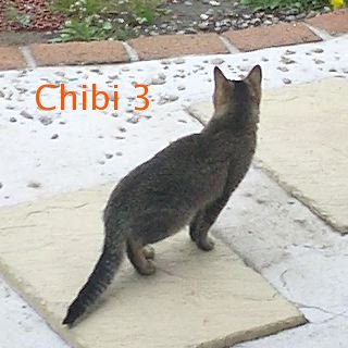 chibi03