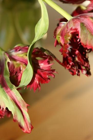tulip042203
