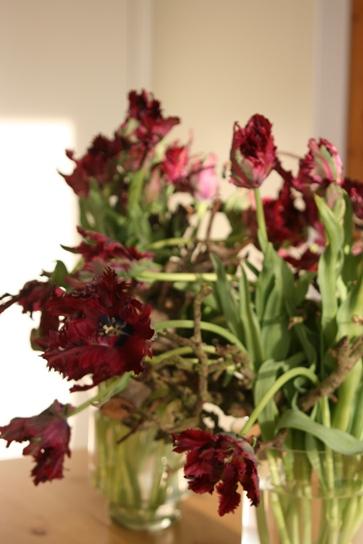 tulip042205
