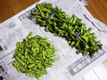 丹波黒枝豆-グルメレポーター修行の日々-