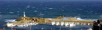 間人の5艘の蟹船-グルメレポーター修行の日々-