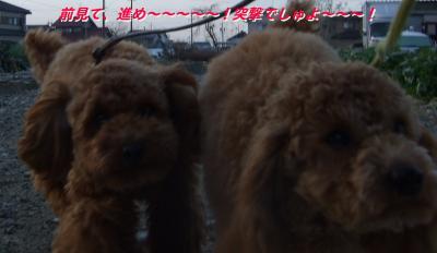 20070220085044.jpg