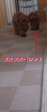 20070403111331.jpg