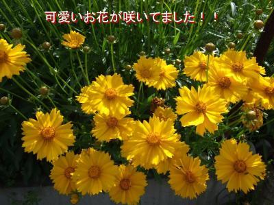 20070526085811.jpg