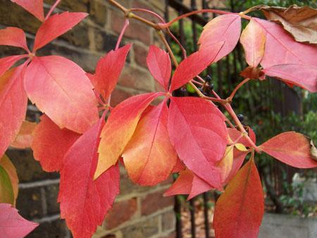 leaves_atmn.jpg
