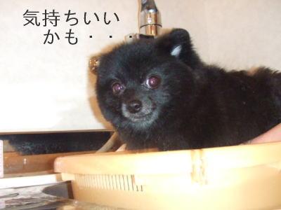 daizu2.jpg