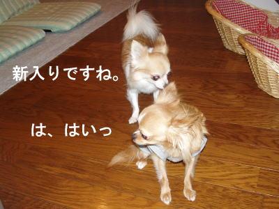 tikuwa6.jpg