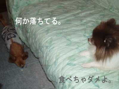 tikuwa8.jpg