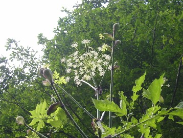 8月23日藪の中の花