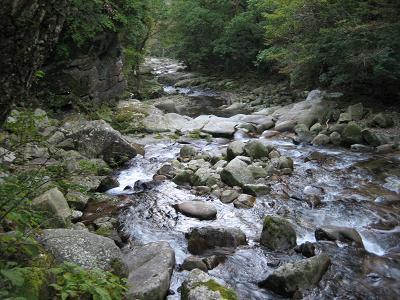 長閑な瀬の下流を見る