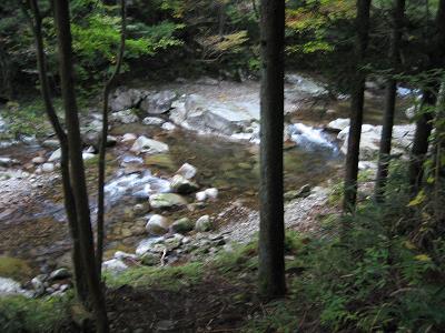 林道から見る流れ