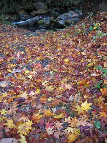 河原の落ち葉(紅葉)