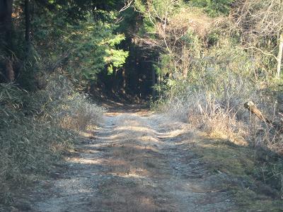 保永の滝への林道