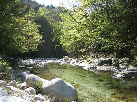 新緑の渓2
