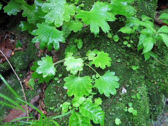 川畔の植物01