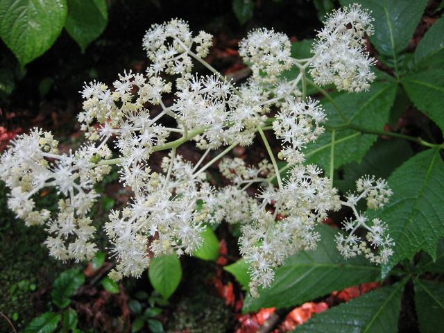川畔の植物02