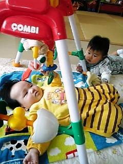 レオ君のおもちゃで遊ばせてもらう蒼馬