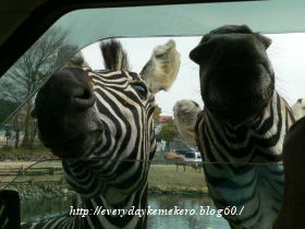 safari02.jpg