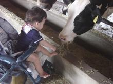 milk-cow.jpg