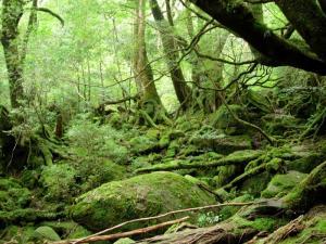 20060906-10-もののけの森