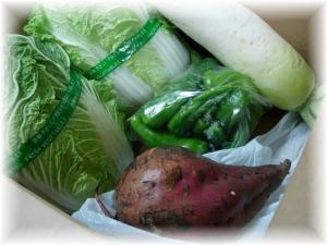 20061109野菜たち2□